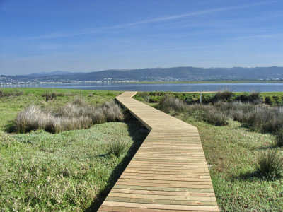 Boardwalk across tidal marsh