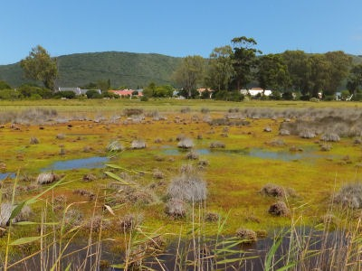 Salt Marsh Restored