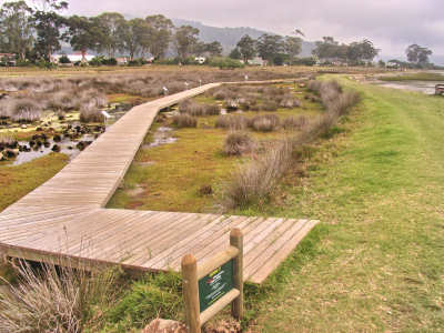 Stroll Through the Salt Marsh