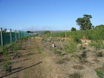 Planting Roger's Way in 2008